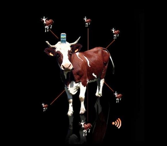 Cow-pro Orange Tour de France